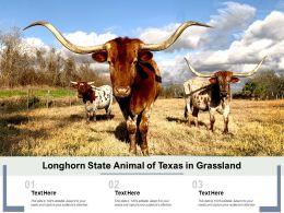 Longhorn State Animal Of Texas In Grassland