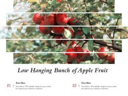 Low Hanging Bunch Of Apple Fruit