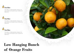 Low Hanging Bunch Of Orange Fruits
