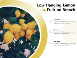Low Hanging Lemon Fruit On Branch