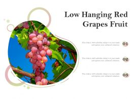 Low Hanging Red Grapes Fruit