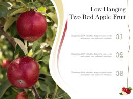 Low Hanging Two Red Apple Fruit