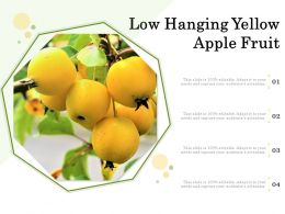 Low Hanging Yellow Apple Fruit