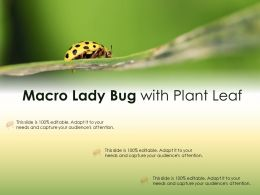 Macro Lady Bug With Plant Leaf