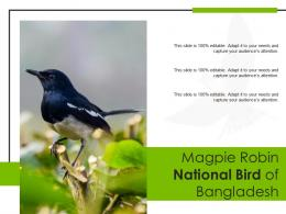 Magpie Robin National Bird Of Bangladesh