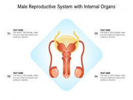 Male Reproductive System With Internal Organs