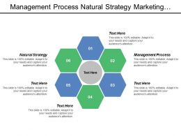 Management Process Natural Strategy Marketing Strategy Interface Marketing Auditing