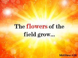 Matthew 6 28 The flowers of the field PowerPoint Church Sermon