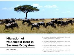 Migration Of Wildebeest Herd In Savanna Ecosystem