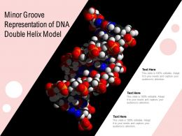 Minor Groove Representation Of DNA Double Helix Model