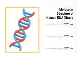 Molecular Structure Of Human DNA Strand