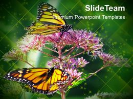 Monarch Butterfly Flowers Nature PowerPoint Templates PPT Themes And Graphics 0213