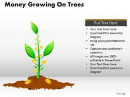 Money Growing on Trees PPT 11