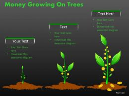Money Growing on Trees PPT 12
