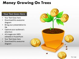 Money Growing on Trees PPT 4