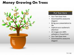 Money Growing on Trees PPT 9