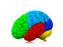 Multicolored Brain For Health Study Stock Photo