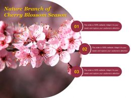 Nature Branch Of Cherry Blossom Season