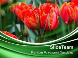 Nature Pictures Powerpoint Templates Beautiful Red Flowers Garden Growth Ppt Design