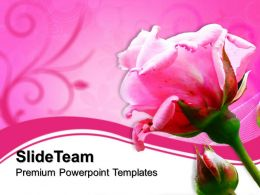Nature Pictures To Download Powerpoint Templates Pink Rose Beauty Editable Ppt Slide Designs