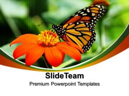Nature Reserves Powerpoint Templates Butterfly Process Ppt Themes
