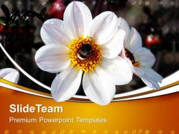 Nature Watch Powerpoint Templates Flower Image Ppt Slides