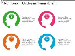 numbers_in_circles_in_human_brain_Slide01