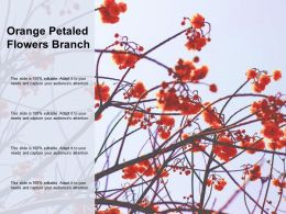 Orange Petaled Flowers Branch