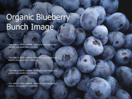 Organic Blueberry Bunch Image