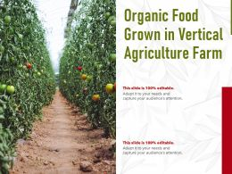 Organic Food Grown In Vertical Agriculture Farm