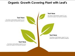 Organic Growth Covering Plant With Leafs