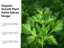 Organic Growth Plant Herbs Spices Image