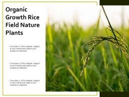 Organic Growth Rice Field Nature Plants