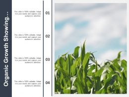 Organic Growth Showing Image Corn Field