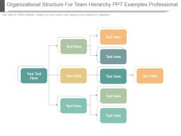Organizational Structure For Team Hierarchy Ppt Examples Professional