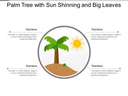 Palm Tree With Sun Shinning And Big Leaves
