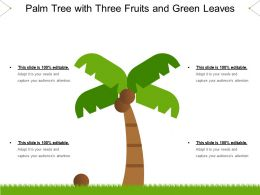 palm_tree_with_three_fruits_and_green_leaves_Slide01
