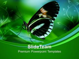 Papilio Butterfly On Leaves Nature PowerPoint Templates PPT Themes And Graphics 0213