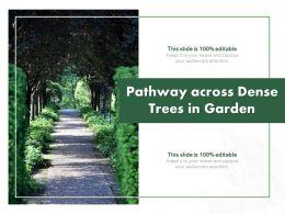 Pathway Across Dense Trees In Garden