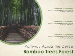 Pathway Across The Dense Bamboo Trees Forest