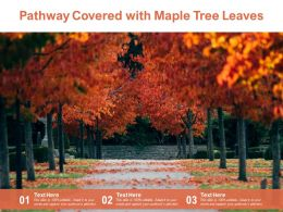 Pathway Covered With Maple Tree Leaves