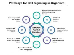 Pathways For Cell Signaling In Organism
