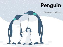 Penguin African Standing Beach Aquatic Animal Emperor