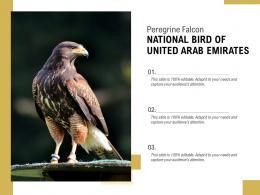 Peregrine Falcon NATIONAL BIRD OF UNITED ARAB EMIRATES