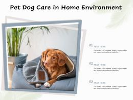 Pet Dog Care In Home Environment