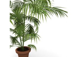 Plant Graphic On White Background Stock Photo