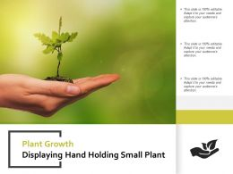 Plant Growth Displaying Hand Holding Small Plant