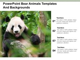 Powerpoint Bear Animals Templates And Backgrounds