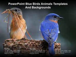 Powerpoint Blue Birds Animals Templates And Backgrounds