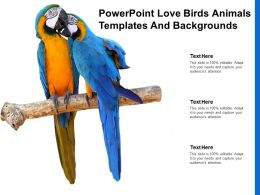 Powerpoint Love Birds Animals Templates And Backgrounds